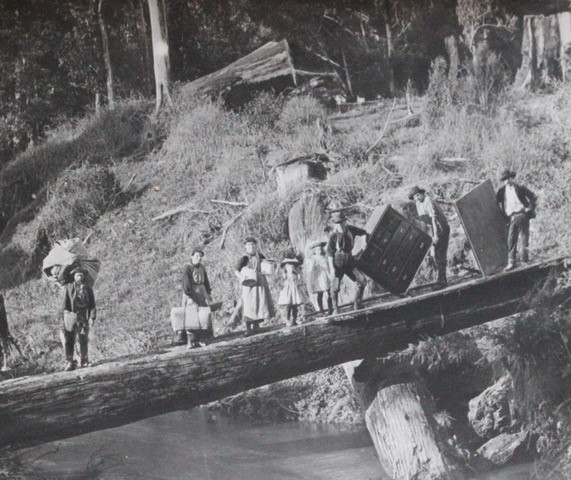 A family moving house across the Tarwin River on a log bridge.